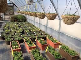 flower pots and planters flower pots garden planters