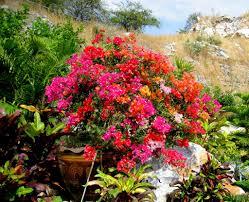 panoramio photo of beatiful flower s boekanfiel