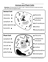 animal and plant cells worksheet plant cell worksheets and plants