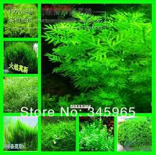 Tropical Aquatic Plants - online buy wholesale plants for tropical aquarium from china
