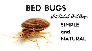 What Kills Bed Bugs Naturally How To Get Rid Of Bed Bugs Natural Home Remedies For Bed Bug