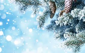 wallpaper new year snow tree needle twig cone branch