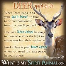 deer symbolism u0026 meaning spirit totem u0026 power animal