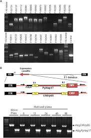 profiling the targets of protective cd8 t cell responses to