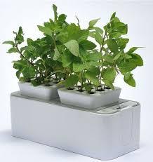 self watering indoor planters zerosoil mini indoor garden self watering planter and indoor herb