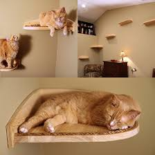 Wall Shelves For Cats Mountain Cat Climbers 25 Off Nice Cat And Cat Climber