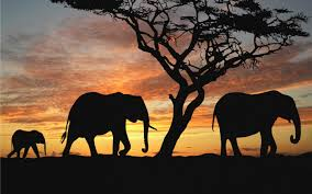 cool elephant wallpaper elephant wallpaper 73 images
