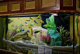 cuisine luxury aquarium decorating aquarium design house fish