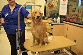 diy dog grooming table mydoglikes guide to the petsmart dog grooming experience