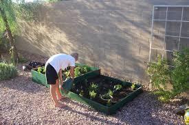 fear free fall vegetable gardening in the desert anthem az news