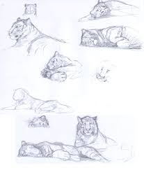 tiger sketches by crisjofreart on deviantart