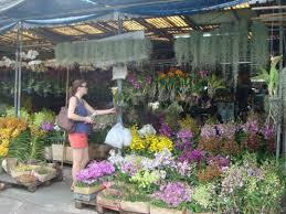 List Of Tropical Plants Names - thai plants for sale traditional flowers flower names list orchids