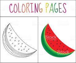 coloring book page watermelon sketch and color version stock