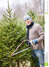 Cutting Christmas Tree - man cutting christmas tree stock photo image of evergreen 29677502