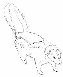 fish outline coloring page skunk coloring pages coloring234