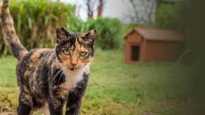 home lanai cat sanctuary