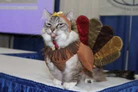 funny thanksgiving meme cute cats in costumes could they get any more adorable than this