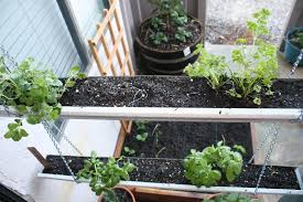 Kitchen Herb Garden Ideas Spinach Growing Tips How To Care And Grow In Containers Best Ideas