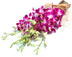 dendrobium orchids dendrobium orchid flowers greenery and more