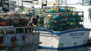 fishing boats sit idle as algae threatens dungeness crab season