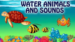 sea animals for kids learn water animals names and sounds for