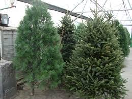 Hydro Christmas Tree Stand - christmas trees minot