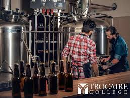brewing distilling and fermentation science program trocaire