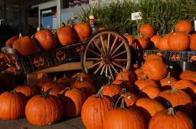 fall pictures with pumpkins for desktop les halloween u2026 a brief history for nutters