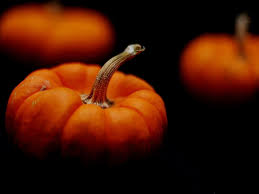 pumpkins 6855251