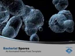 free templates for powerpoint bacteria bacterial organism spores a powerpoint template from