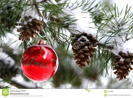 Red Christmas Decoration Snow covered Pine Tree Outdoors Stock