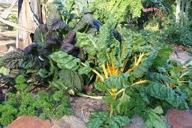 ornamental vegetable gardens for fall