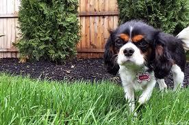 Backyard Landscaping Ideas For Dogs Dog Friendly Garden Ideas We Know Stuff