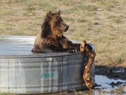 Colorado wild animals images 7 secrets of the animal wildlife sanctuary in keenesburg denver7 JPG