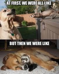 Funny Meme Dog - meme s lessons tes teach