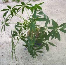 common house plants names names of all houseplants house plants