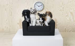 Ikea Cuccia Cane by La Nuova Collezione Ikea Per Animali Animali Pucciosi