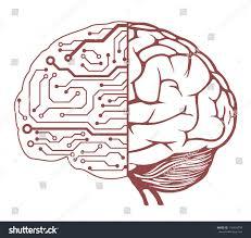 brain anatomy coloring book human brain central processing unit vector stock vector 116454793