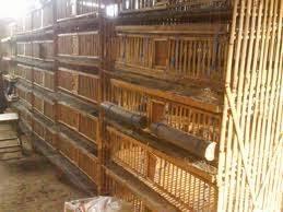 Termometer Kandang Ayam diebuechertante contoh kandang ayam petelur