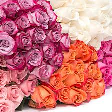 different color roses quality roses different colors 48fresh
