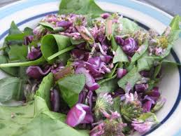 Salad With Edible Flowers - dandelion spinach salad with red cabbage and clover petals wild