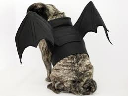 Extra Large Dog Halloween Costumes Bat Wings Halloween Costume Dog Bat Wings Dog