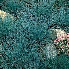 56 best grasses images on ornamental grasses garden