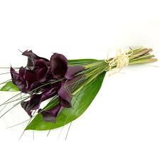 black calla send black magic calla lilies for uk flower delivery from clare