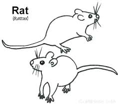 coloring page of a rat rat coloring page rat coloring pages rat coloring pages mouse