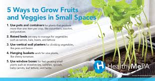how to grow fruits u0026 veggies in your apartment or rooftop garden