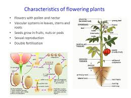 Reproduction In Flowering Plants - sexual reproduction in plants ppt download