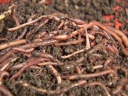 organic garden fertilizers and plant food using earthworm castings