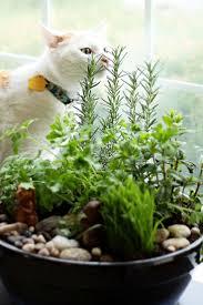 cat friendly houseplants 10 non toxic plants cool stuff for cats