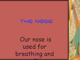 the nose for grade 3 authorstream